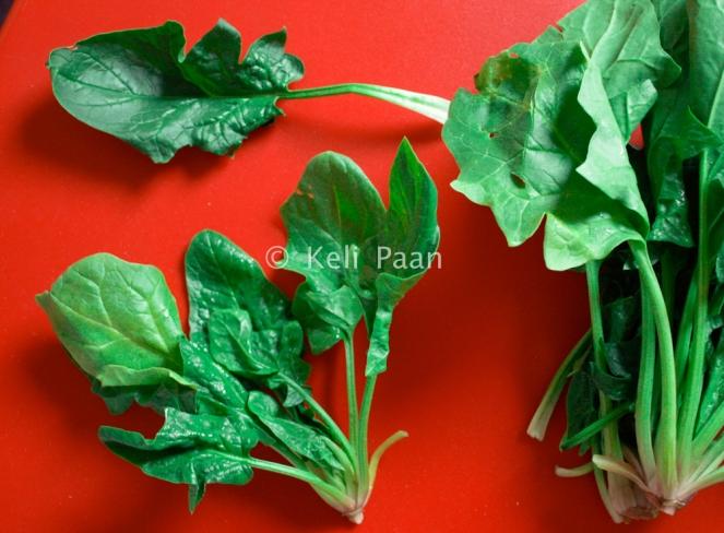 Oriental Spinach